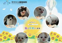 猫の里親募集情報|江戸川区「すがわら動物病院」
